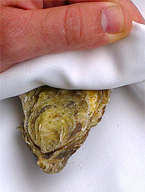Hold the oyster in a tea towel