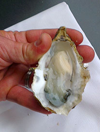 6. Your shucked oyster, ready for eating