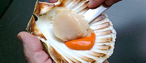 Slide the knife under scallop meat, again keeping the blade close the shell and cut away. Remove the small white ligament on the side of meat.